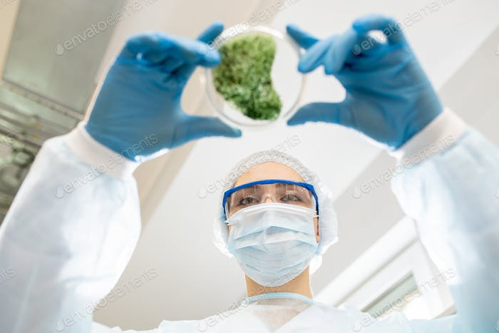 Environmental researcher working in laboratory