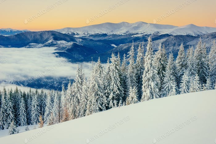 fog in winter mountains. Fantastic sunset. Carpathians. Ukraine
