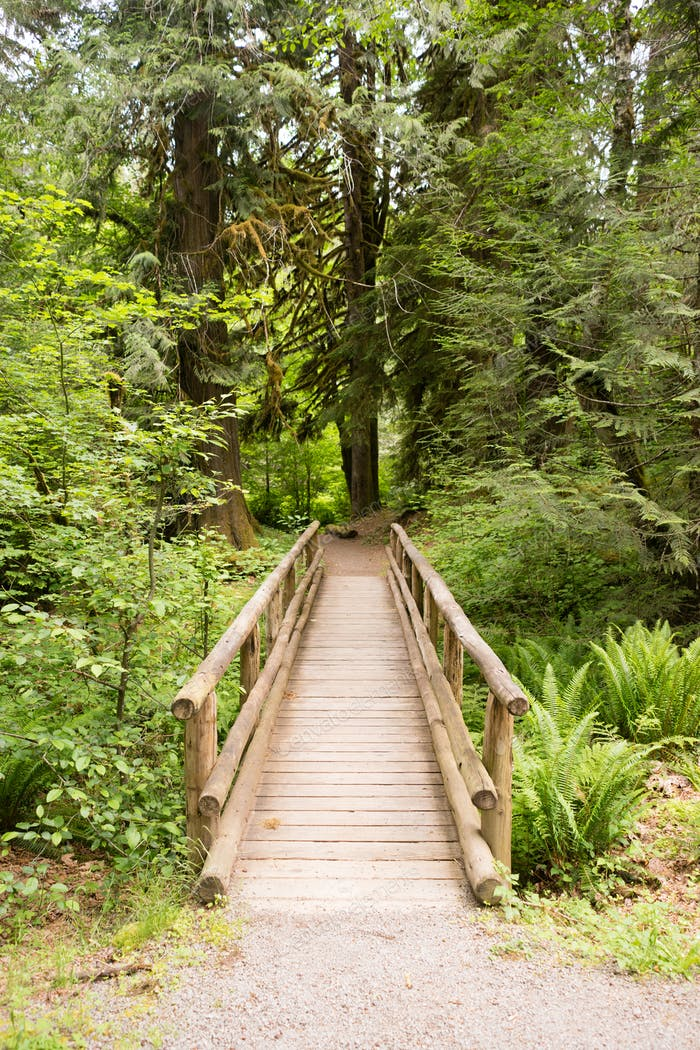 Wood Path Boardwalk Bridge Leads into The Forest
