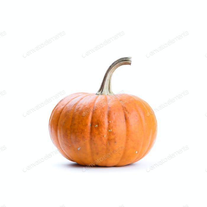 Pumpkin on white background isolated