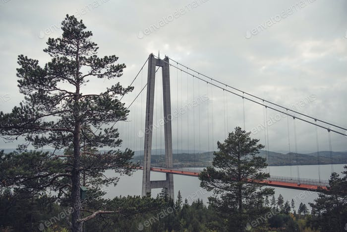 Trees and bridge