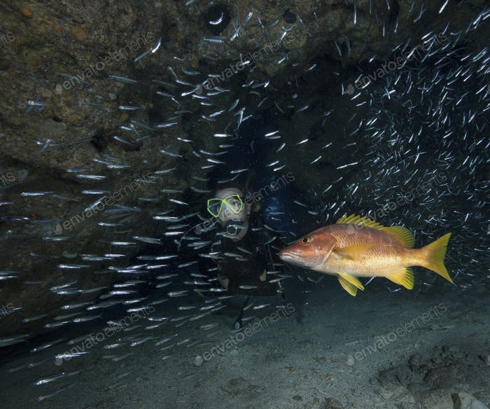 Scuba diver in the midst of schooling Glass minnows