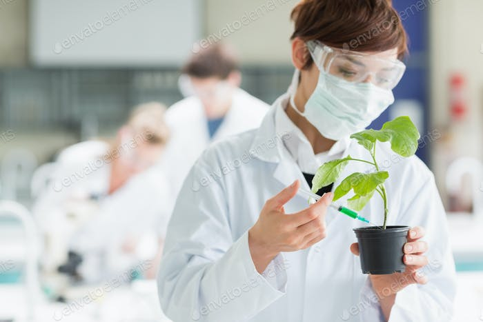 Frau, die im Labor steht, während eine Pflanze hält, die mit Spritze chemisch auf den Boden hinzufügt