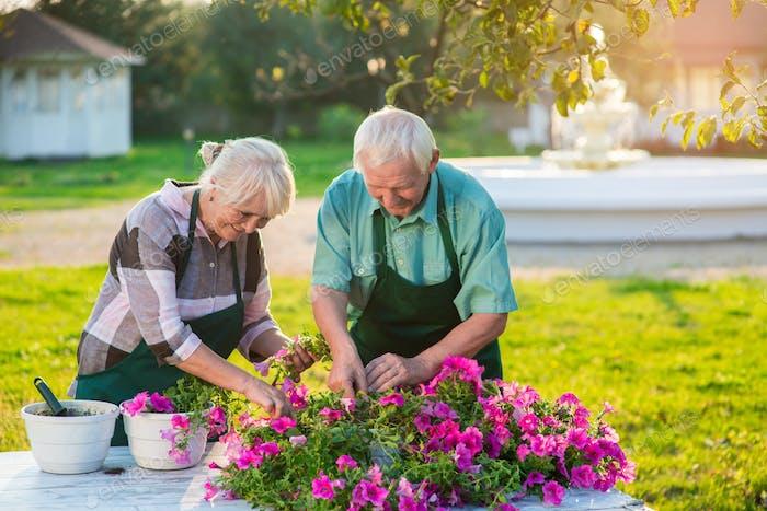 Couple transplanting flowers