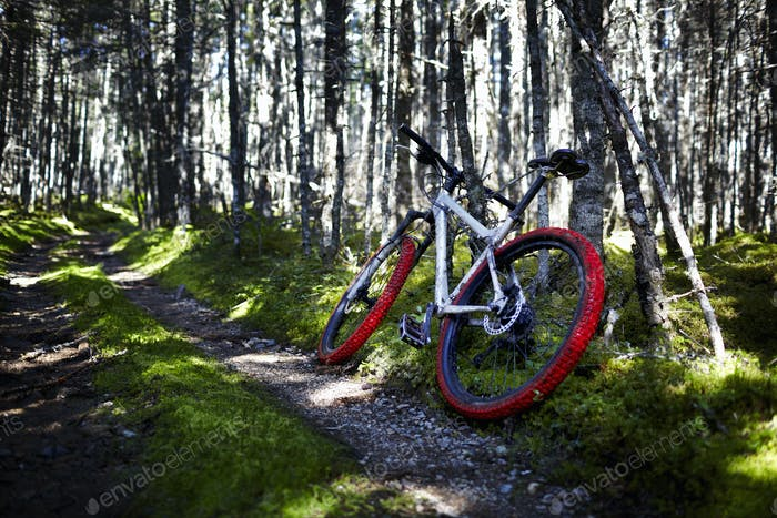 Mountain Bike on Trail