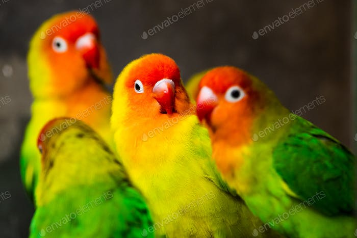 Beautiful parrots, Sun Conure on tree branch