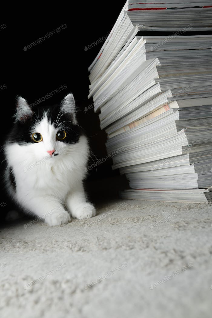 Kitten and a stack of magazines
