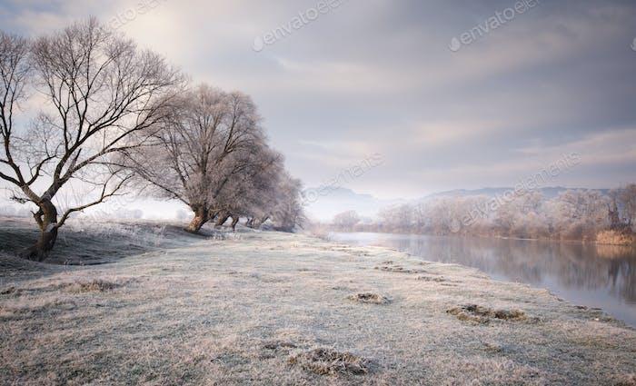 Frozen meadow in winter on lake shore