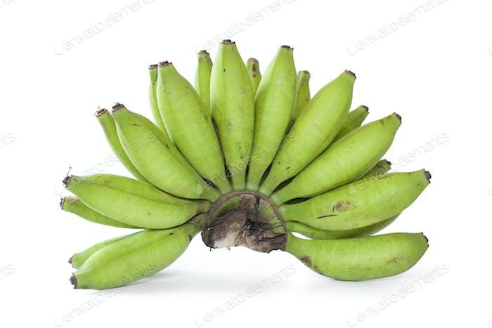 Bunch of green young bananas
