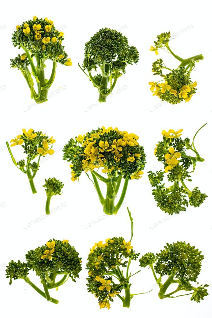 Broccoli flowers isolated