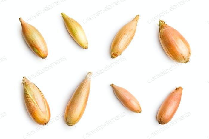 Thumbnail for The golden shallot onion.