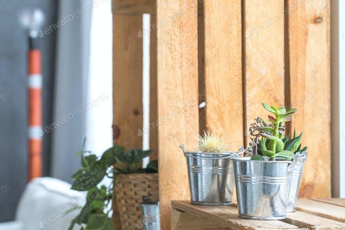 Pflanzen auf dem Regal
