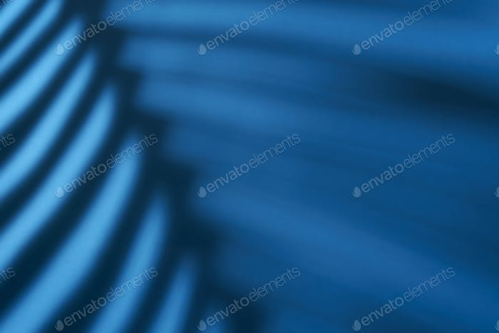 Beautiful fern leaves blue shadow colored background in artificial light
