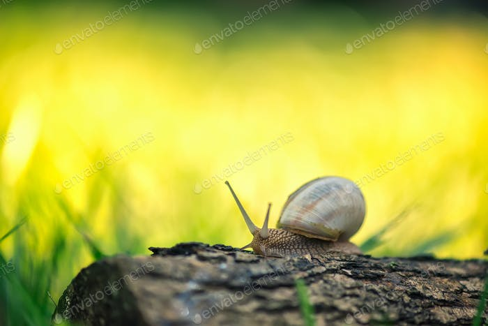 Snail on a log
