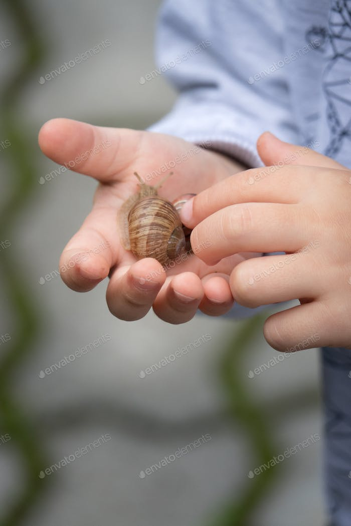 Little boy holding large snail in his hand