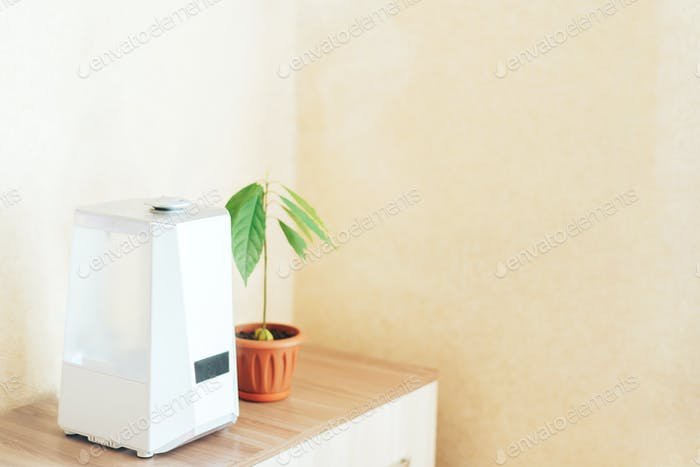 White humidifier on the nightstand next to an avocado sprout. Humidification, ionization and air