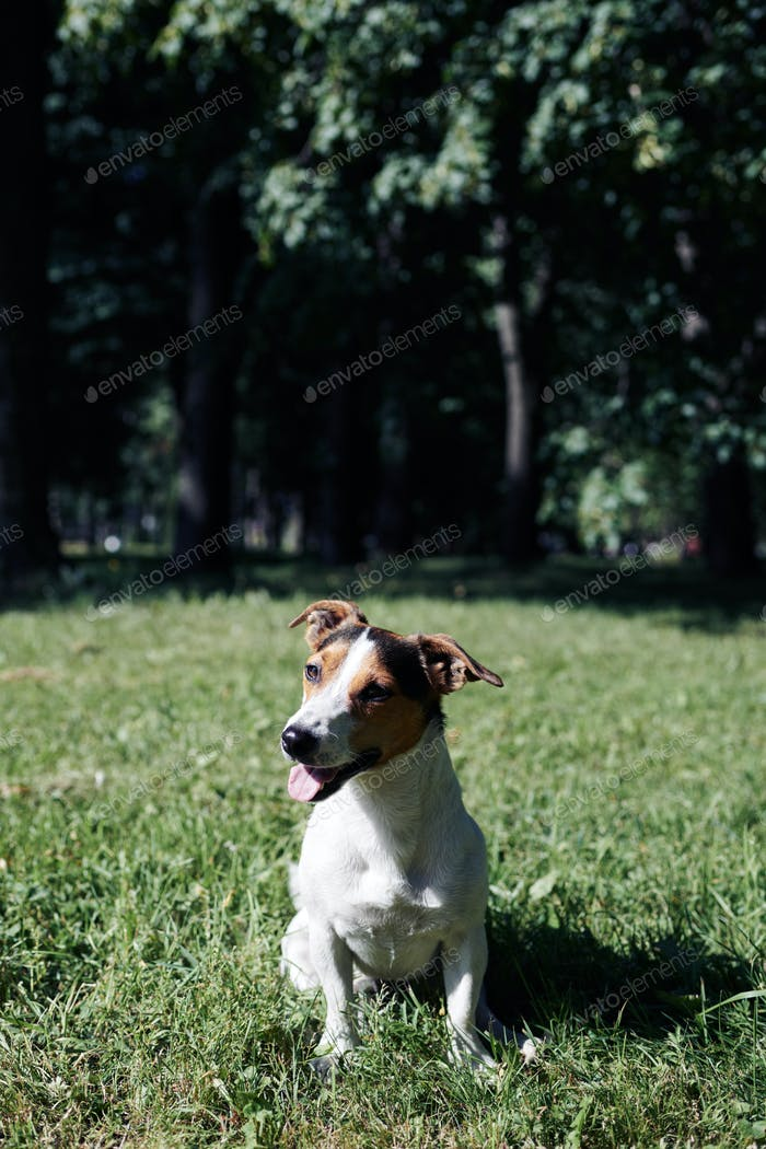 Funny dog sitting in park