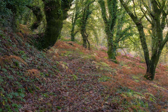 Autumnal shades in the leaves of the trees and in the ferns