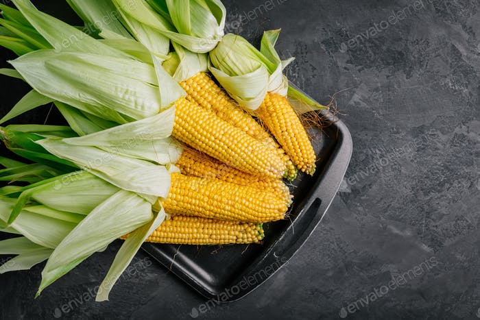 Fresh sweet golden corn on cobs on dark gray stone background