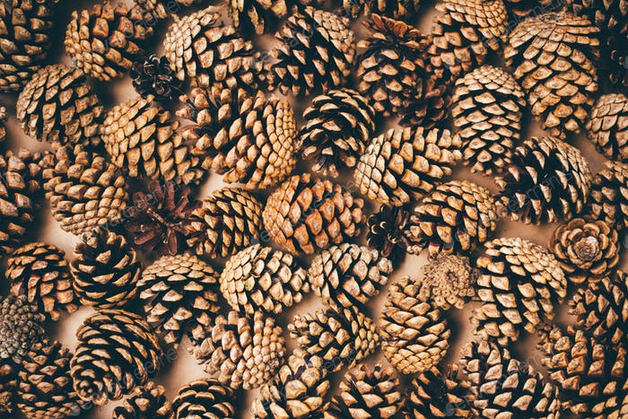 Full frame image of pine cones background.