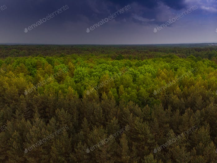 Thunderstorm over wild forest at spring,aerial drone