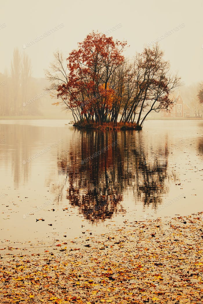 Autumn lake in the park