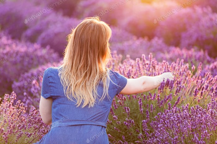 Young woman picking lavender flowers at sunset.
