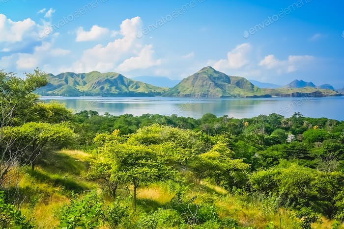 Green lush jungle mountain coastal landscape of Komodo