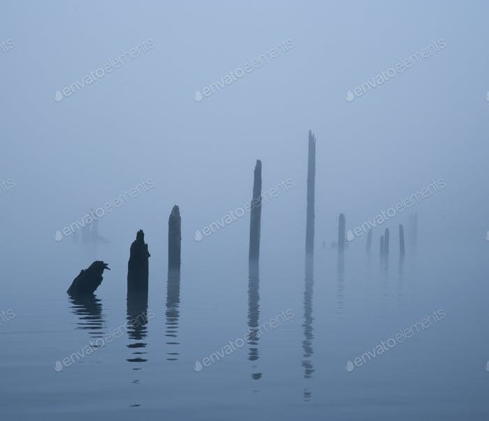 49953,Pier Pilings in Water