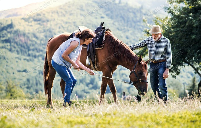 A senior couple holding a horse grazing on a pasture.