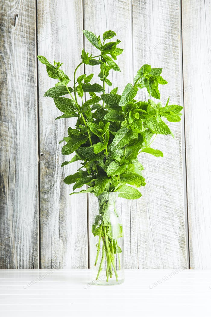 Branches of green mint in a vase.