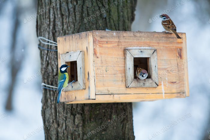bird feeders. tree house for the birds.  Bird feeder in winter p