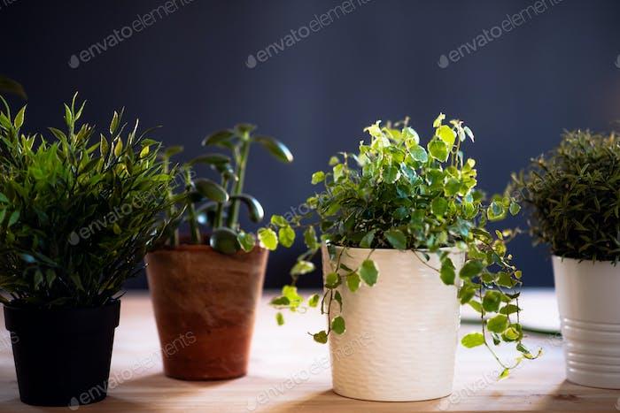 Plants in flower pots on desk against dark background. A startup of florist business.