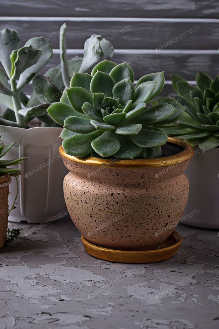 Different type of succulents in pot on the windowsill