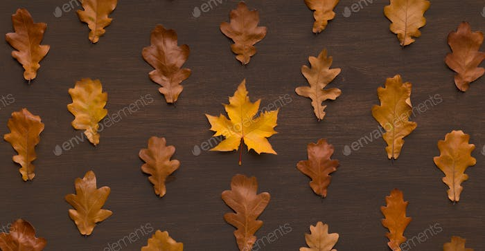 Straight lines of dry brown oak and maple leaves