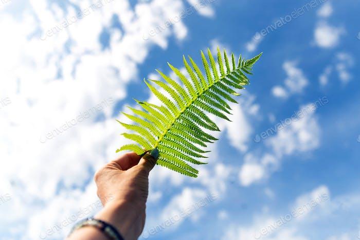 Fern leaf on the blue sky background