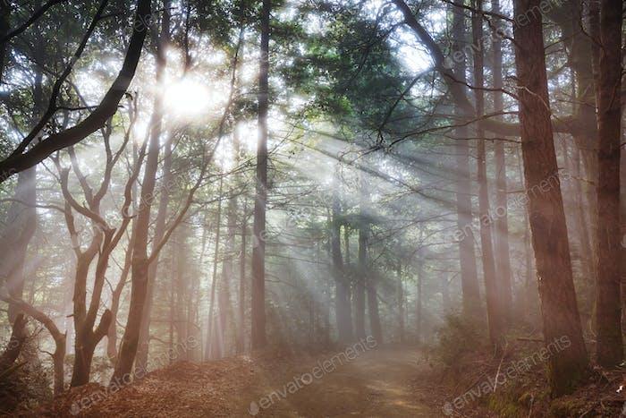 Bosque soleado