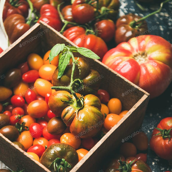 Fresh colorful heirloom, bunch and cherry tomatoes, square crop