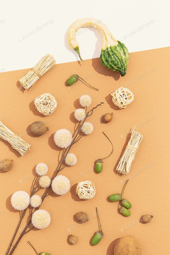 Autumn Fall minimal background. Herbarium Flat lay with shadows. Beige fashion colours