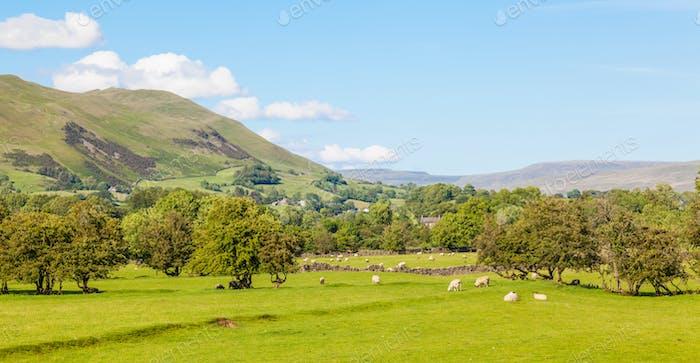 Yorkshire Dales Agricultural Landscape