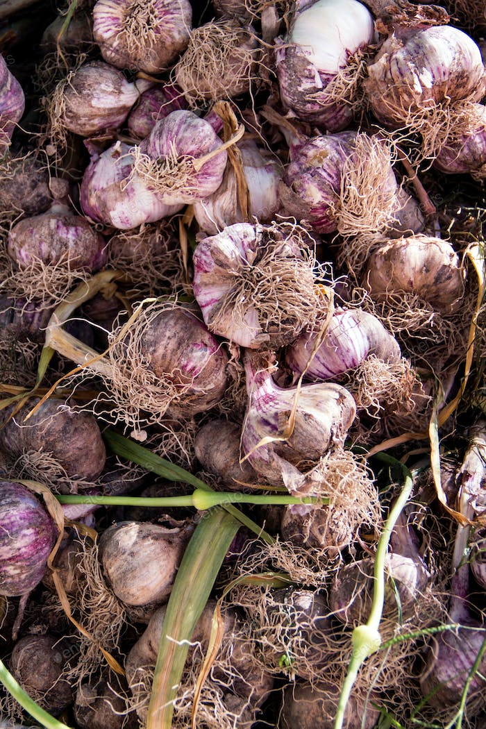 Fresh local garlic on a farmer's market