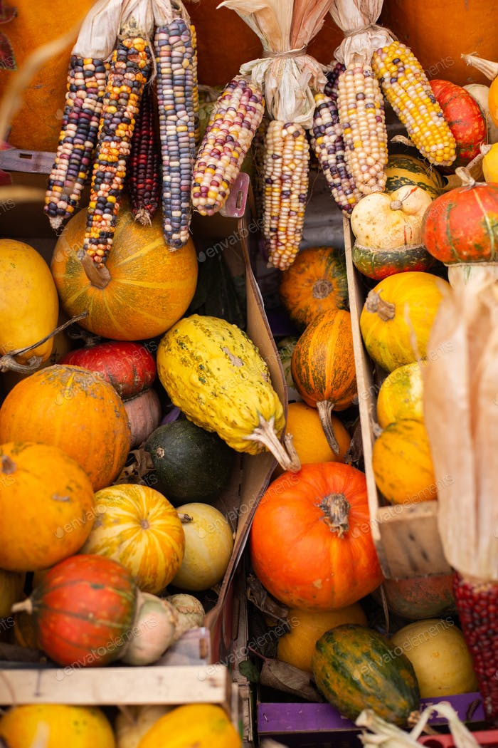Photo of pumpkins and colorful corn at autumn farm shop outdoor