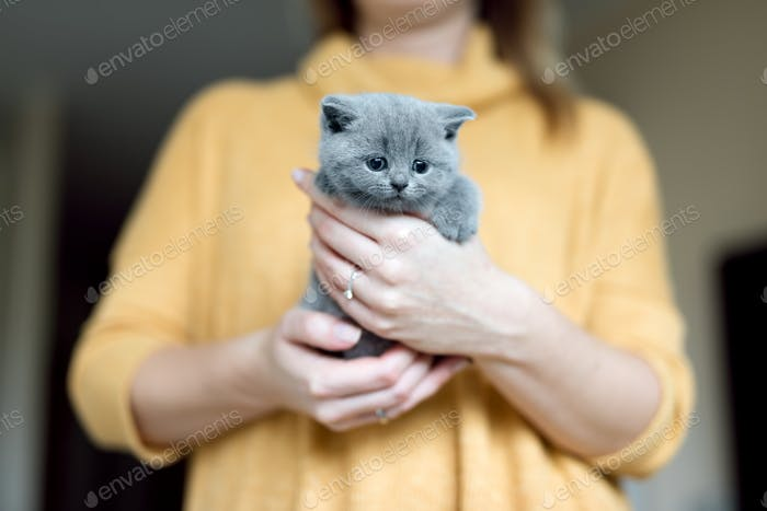 Grey adorable kitty held by a woman