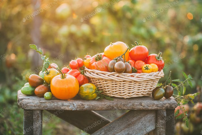 Colorful tomatoes on little vintage wooden table.