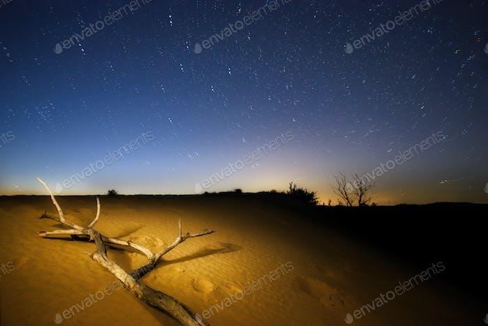 Tree branch in the desert