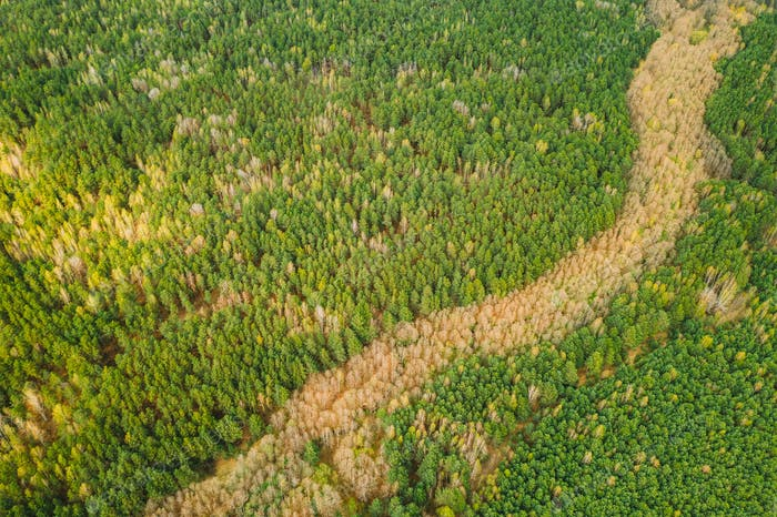 Spring Season. Aerial View Of Deciduous Trees Without Foliage Leaves And Green Pine Forest In