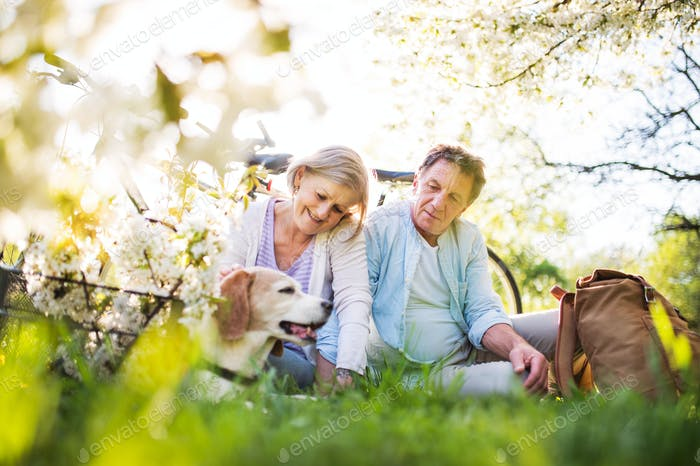 Beautiful senior couple with dog and bicycles outside in spring nature.