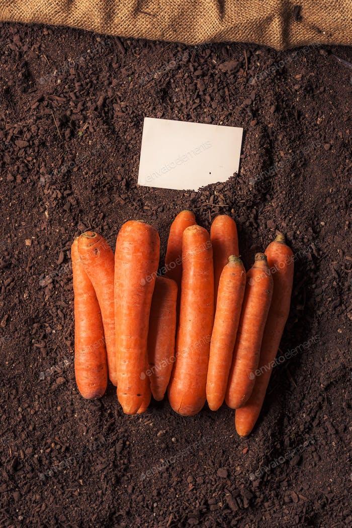 Organic carrot growing business card mock up