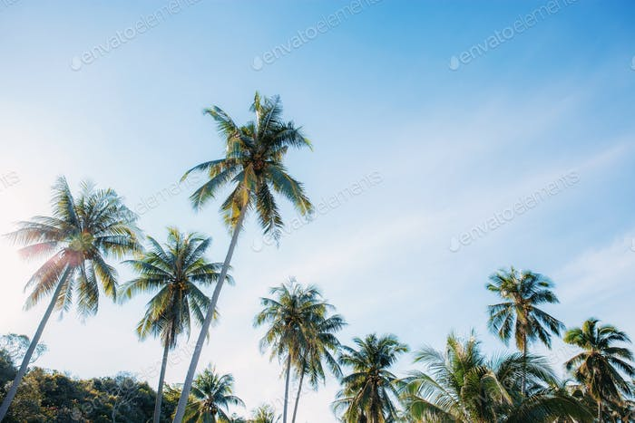 Coconut tree with beautiful at sky