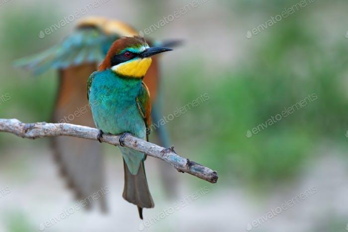 Exotischer tropischer Vogel